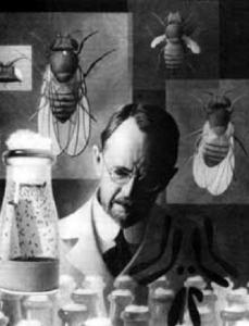 Figure 1. T. H. Morgan with fly drawings. Courtesy of The Archives, California Institute of Technology.