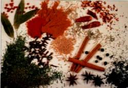 Figure 2. Spices come from various woody shrubs and vines, trees, aromatic lichens, and the roots, flowers, seeds, and fruits of herbaceous plants. Cookbooks generally do not distinguish between herbs, which are usually used in their fresh state, and spices, which are generally dried before use. Photo courtesy of Thomas Neuhaus, Neuhaus Features.