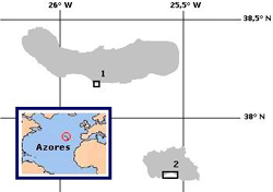 Figure 2. Map of the oriental group of the Azores Archipelago showing sampling sites at (1) Agua dAlto (Sao Miguel Island) and (2) Praia Formosa (Santa Maria Island).