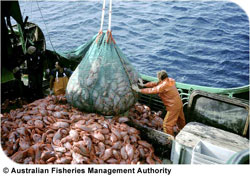 Deep sea fishing activity results not only in species depletion, but also in habitat destruction. Source: Australian Fisheries Management Authority.
