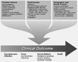 Figure 2. Factors affecting the ultimate disease outcome in Malarial infection.
