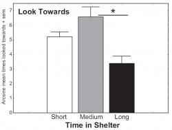 Figure 2: Mean arcsine transformed data of the proportion of subjects who Looked Towards a human experimenter. All subjects were shelter dogs and were categorized as to length of stay in the shelter. A short span was defined as 0-21 days, a medium span, 22-42 days, and a long span, 43 days and up. Dogs in the shelter for a medium span responded with a Look Towards significantly more than dogs in the shelter for a long span of time.