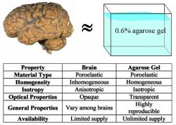 Figure 1: Comparison of brain and agarose gel properties. The agarose gel is a relatively inexpensive brain surrogate whose properties closely match with that of the brain tissue (Chen et al. 2002; 2004)