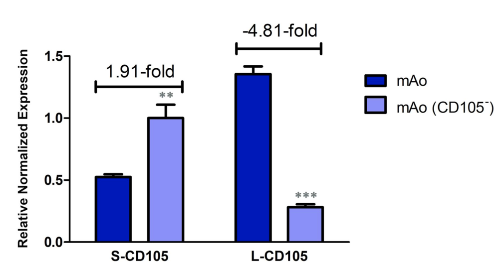 Figure 3. Confirmation of siRNA transfection efficiency.  Using real-time reverse transcription PCR and CD105 isoform-specific primers, transcript levels of S-CD105 and L-CD105 were measured in mAo and mAo transfected with CD105 siRNA. Data are expressed as mean ± SEM and are representative of three separate experiments.