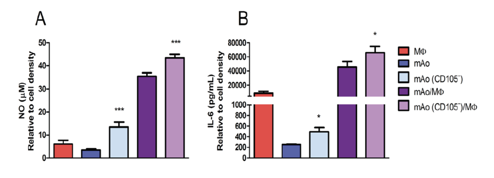 Figure 5. LPS-induced NO (A) and IL-6 (B) production is increased in supernatant of CD105-deficient mAo progenitor cultures and in co-cultures of CD105-deficient mAo and MΦ.  Data are expressed as mean ± SEM and are representative of three separate experiments each with  n  = 6. Significant differences were determined after 2-way ANOVA using Bonferroni's post-test.
