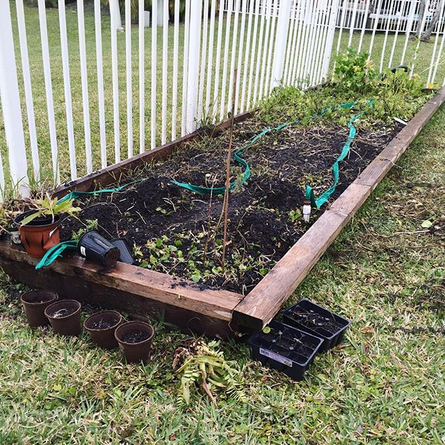 Revamped my garden with cucumber, lettuce, and tomato seeds #springcleaning, #tomatoseed, #cucumberseed, #lettuceseed, #composting, #compost, #sustainability, #wastediversion, #bocaraton, #delraybeach, #boyntonbeach, #wastediversion, #composting, #green, #florida, #southflorida, #sustainable, #feedthepoor, #community, #environmentalism, #produce, #palmbeachcounty, #nonprofit, #palmbeachcompost, #sprout, #sprouting, #growsomethinggreen, #urbangardenersrepublic