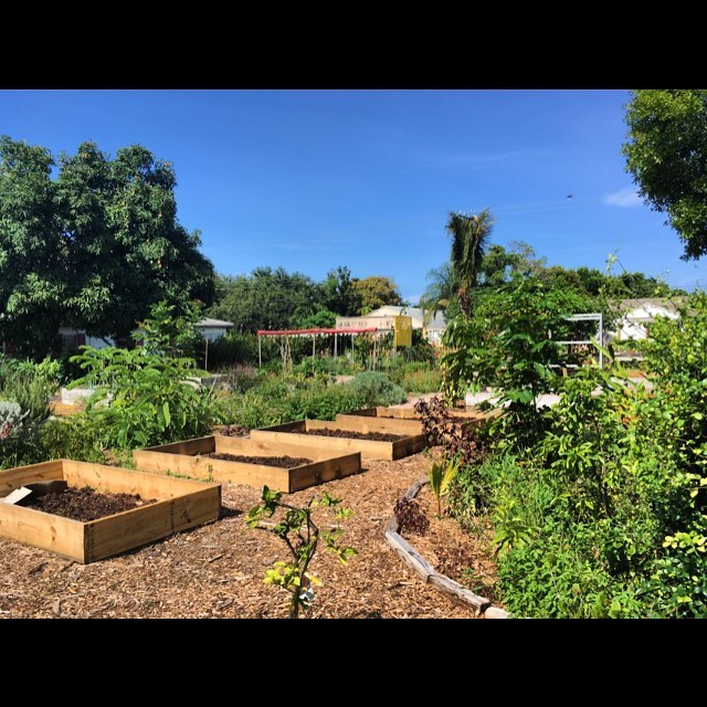 If you live in the the Delray Beach area check out our friends over at Frog Alley Community Garden! #CompostTogether !! #palmbeachcounty #Gardens #PalmBeachState #FAU #Volunteer  #palmbeachgardens , #palmbeachcompost,  #composting, #compost, #sustainability, #bocaraton, #delraybeach, #boyntonbeach, #wastediversion, #composting, #florida, #southflorida, #sustainable, #feedthepoor, #community, #environmentalism, #produce, #palmbeachcounty, #nonprofit , #sprout, #sprouting #lakeworth #palmbeachcounty #frogalley