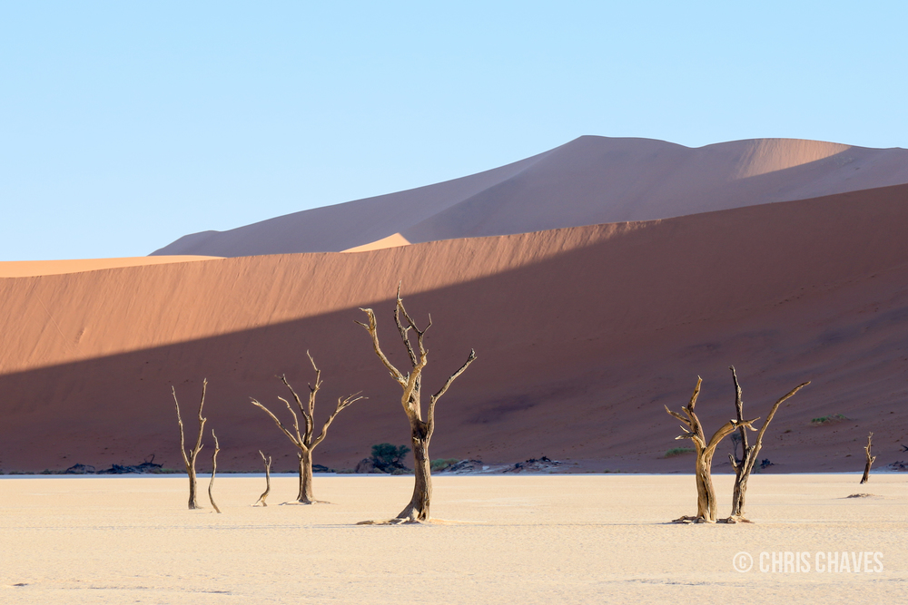 Deadvlei Camel Thorn Trees.jpg
