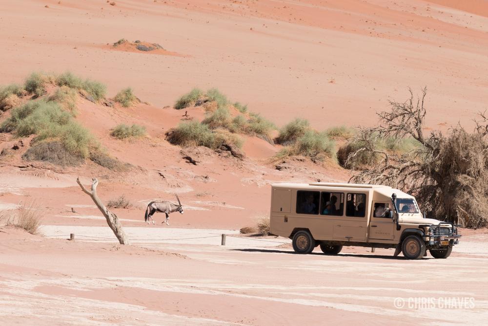Oryx at Sossusvlei.jpg