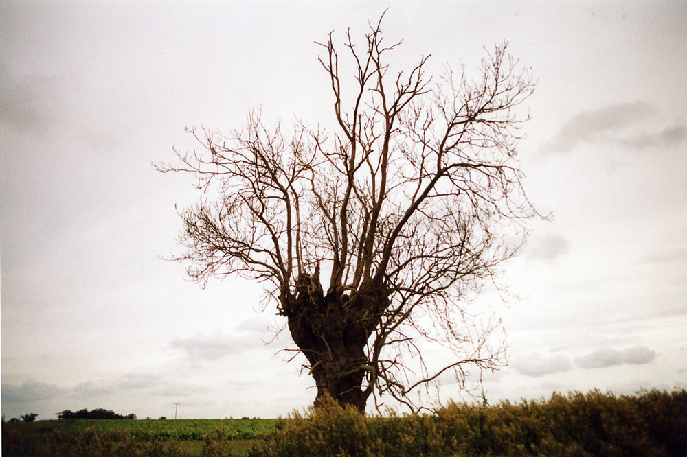 Trees-9.jpg