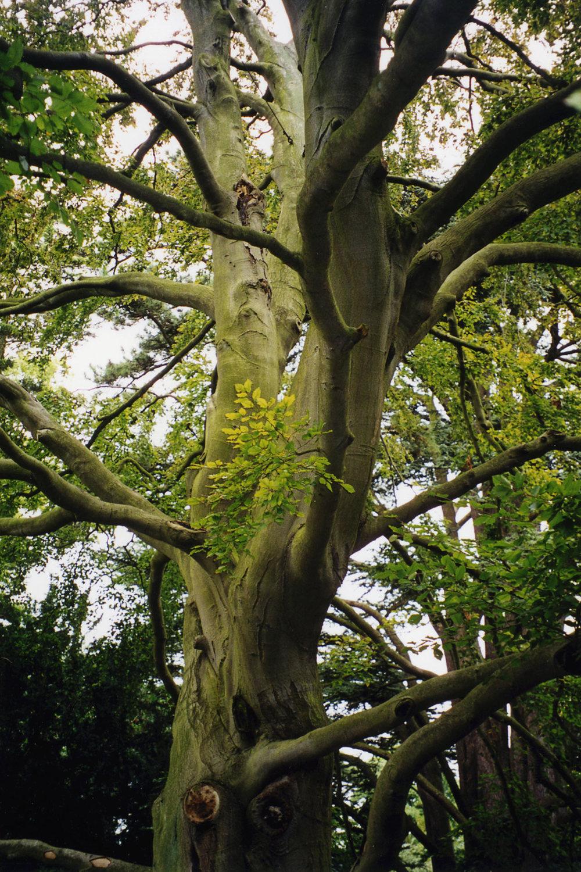 Trees-8.jpg