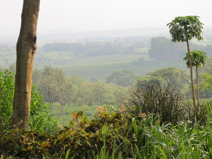 gibbs-farm-tanzania-views-safari