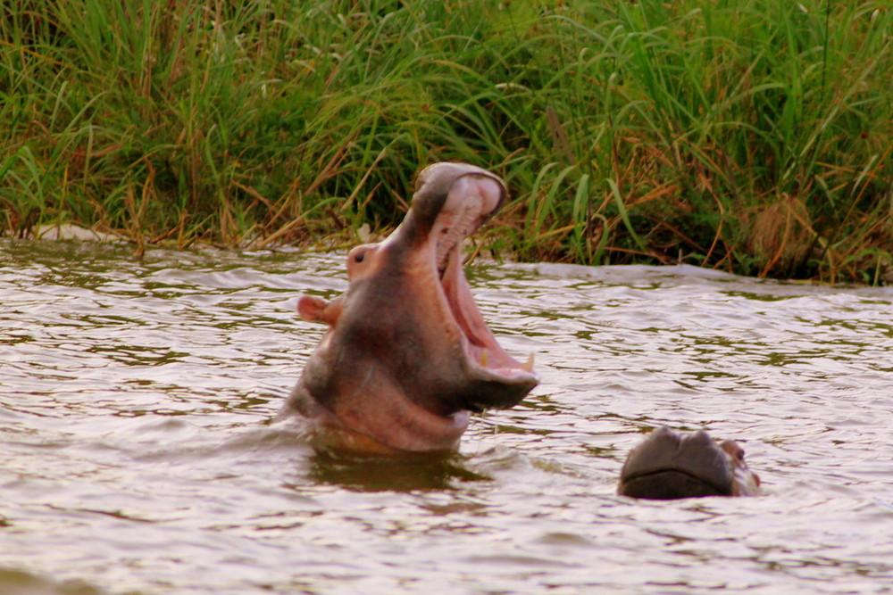 hippo-akagera-rwanda.JPG