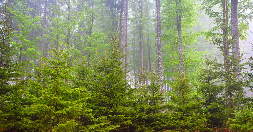 Bayerischer_Wald_090501_069-070_Pano_V2.jpg