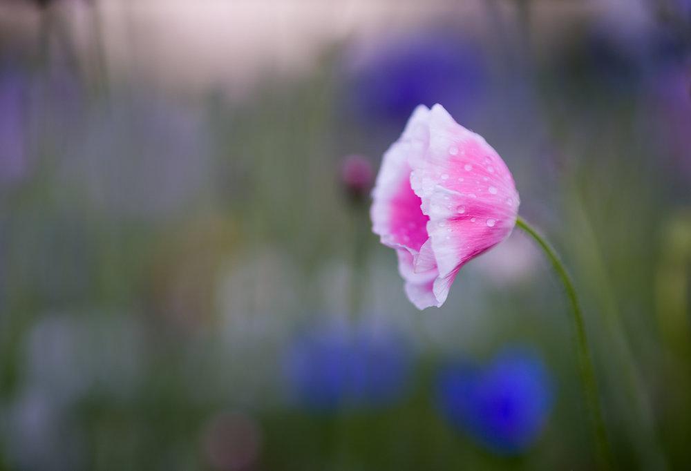 Flowers_150720_126.jpg