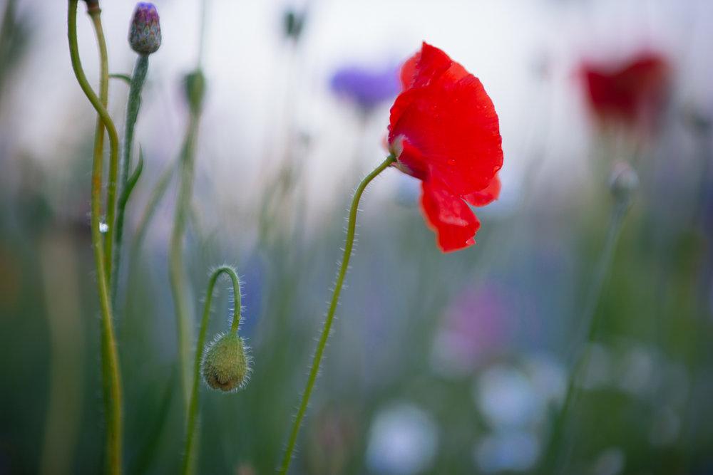 Flowers_150720_127.jpg