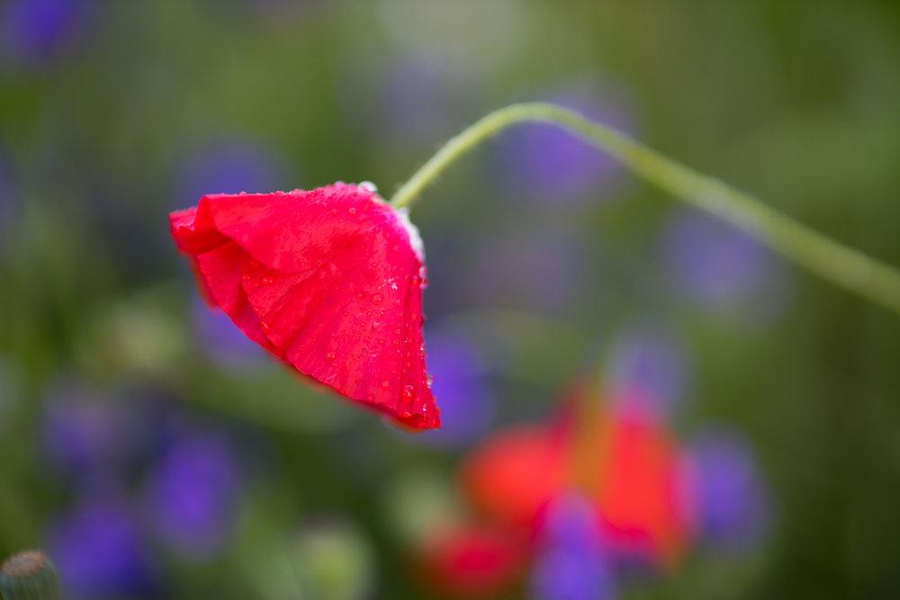 Flowers_150720_099.jpg