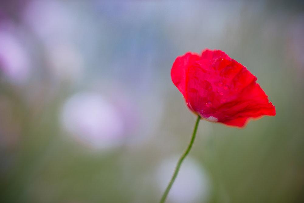 Flowers_150720_092.jpg