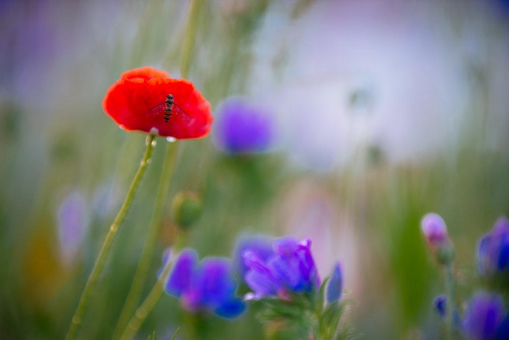 Flowers_150720_084.jpg
