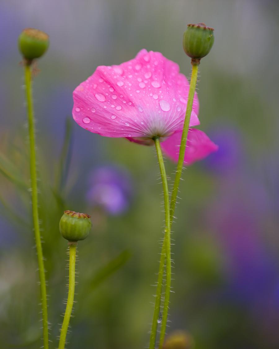 Flowers_150720_073.jpg