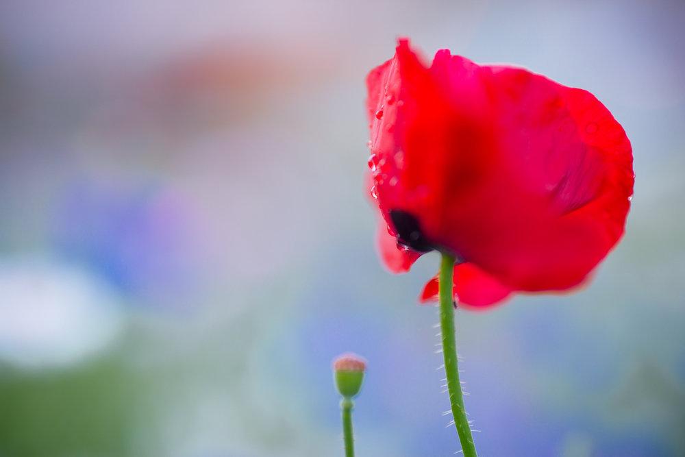 Flowers_150720_063.jpg