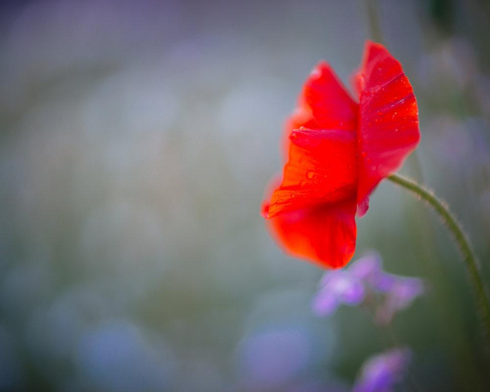 Flowers_150720_040.jpg