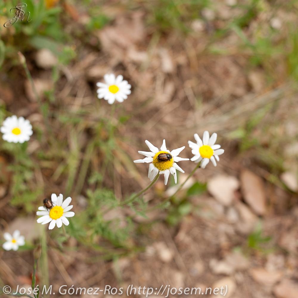flowers3c.jpg