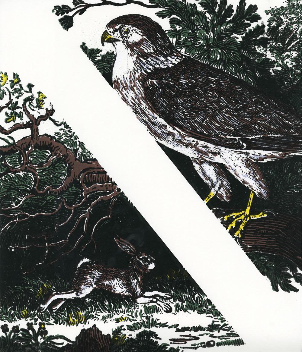 Hawk vs Rabbit, 2013