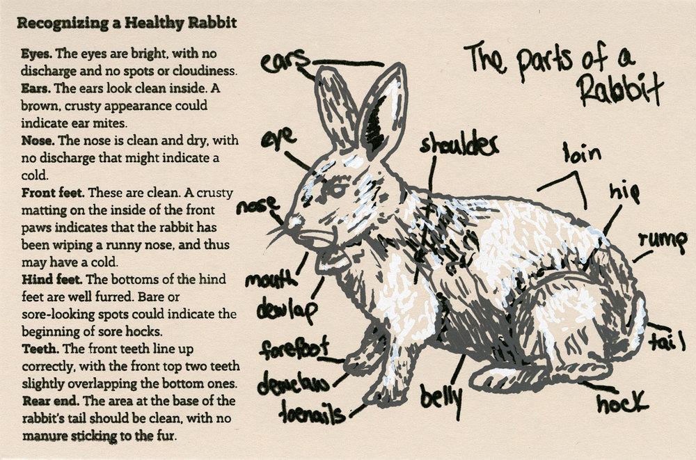 Healthy Rabbit, 2013
