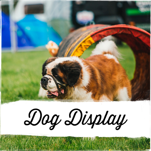 Dog-Display-1.jpg