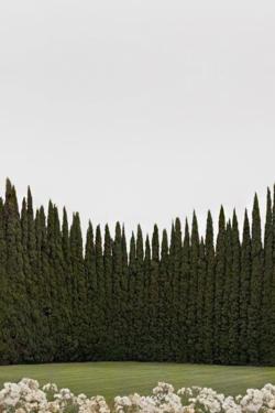 yokoo :       Palm Trees.