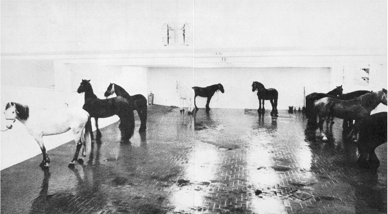 raveneuse :     Jannis Kounellis,  Untitled (12 Horses) , 1969.