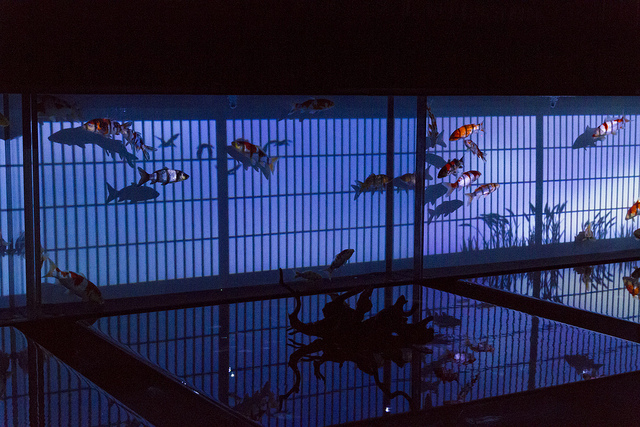 luxori :      Art Aquarium  by  yasa_  on Flickr.