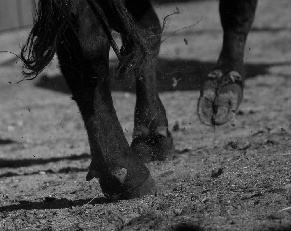 """j.d. VanLandingham    VanLandingham Ranch, Hooves, 2017  Framed 30.75"""" x 44.25  CJV0026"""