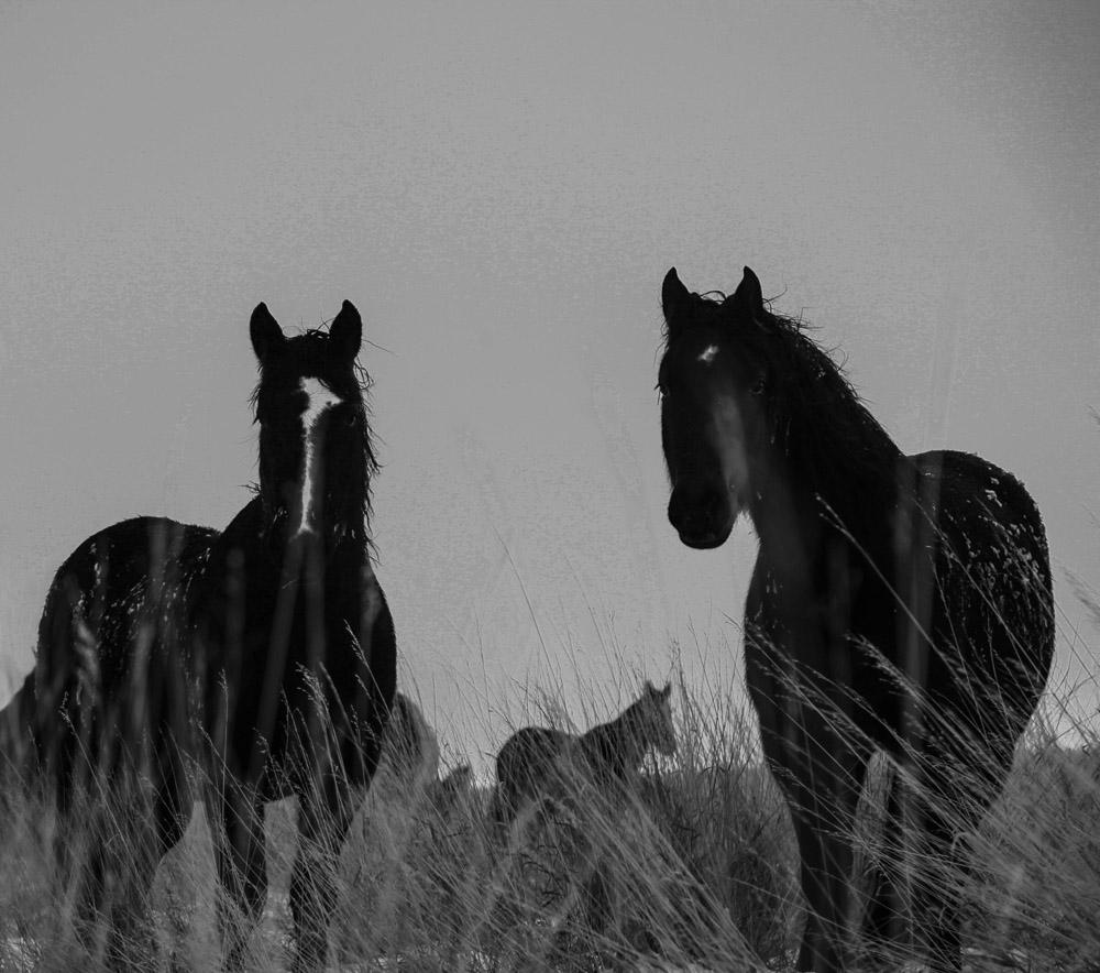 """j.d. VanLandingham    Sankey Ranch, 2016  Framed 29.5"""" x 33""""  CJV0013"""