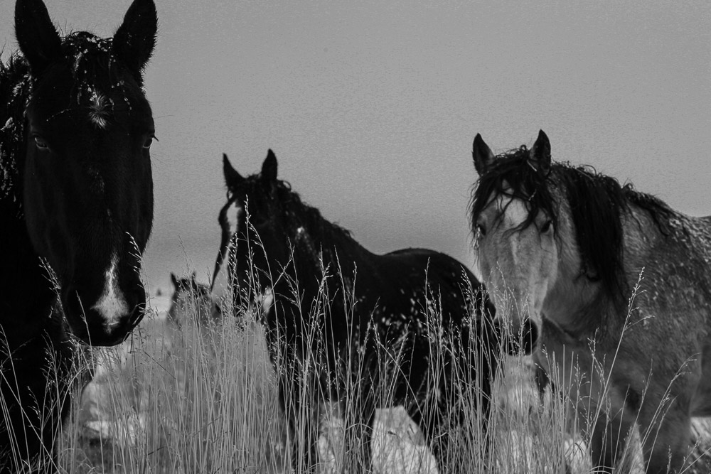 """j.d. VanLandingham    Sankey Ranch, 2016  Framed 38"""" x 36""""  CJV0019"""