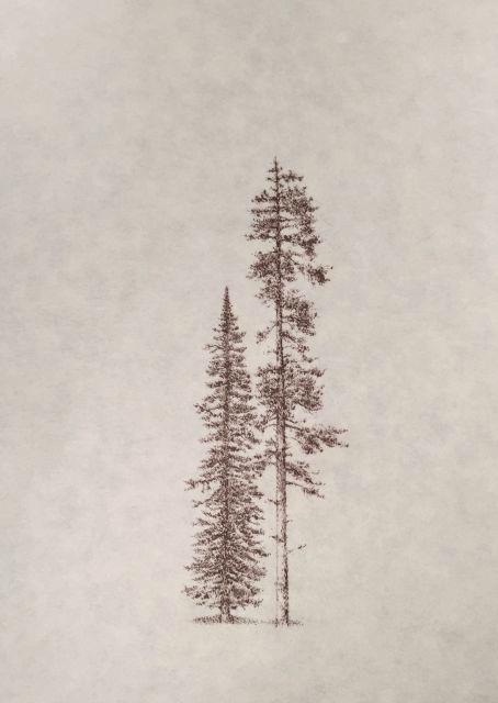"John Saurer    Spruce and Ponderosa   Branded Paper Drawing, Thai Mulberry Paper  30"" x 22""  CJS0025"