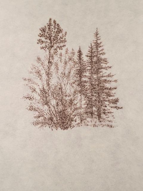 "John Saurer    Bohart Trees   Branded Paper Drawing, Thai Mulberry Paper  30"" x 22""  CJS0031"