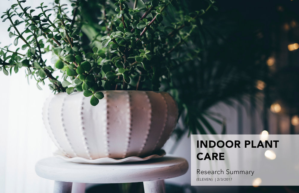 Indoor_Plant_V4.jpg