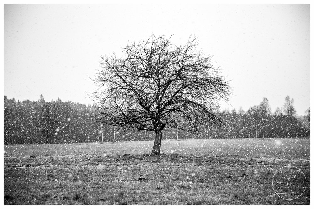 Snow, black/white