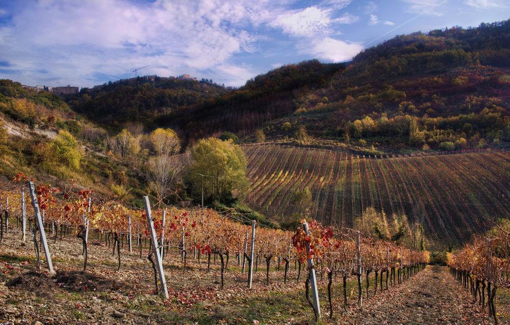 13869099313_5c2431e630_b_marche-vineyards.jpg