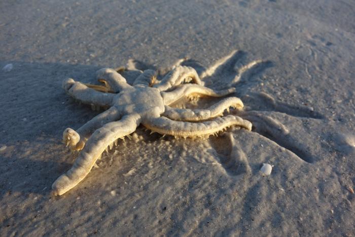 low tide shells-12.jpg