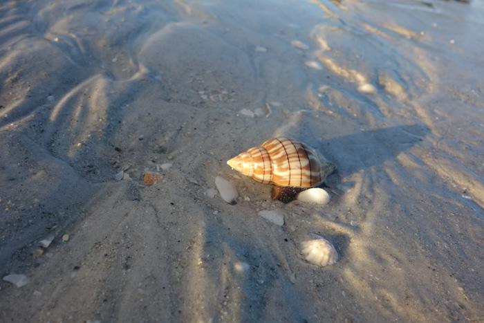 low tide shells-10.jpg