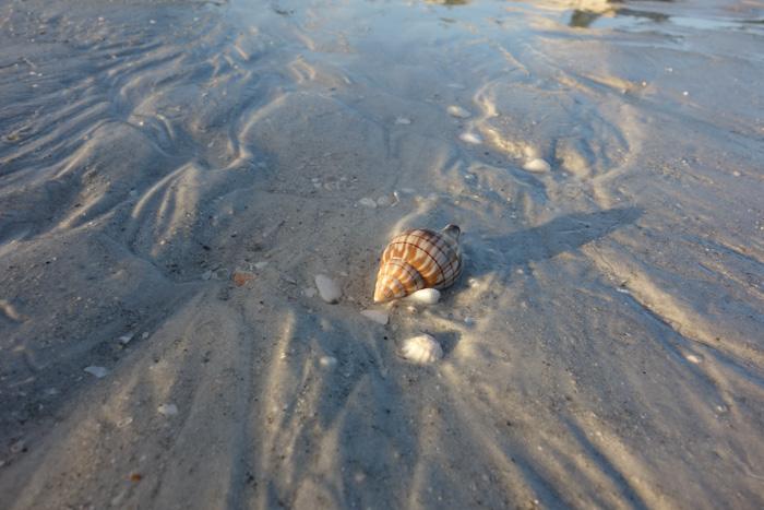 low tide shells-11.jpg