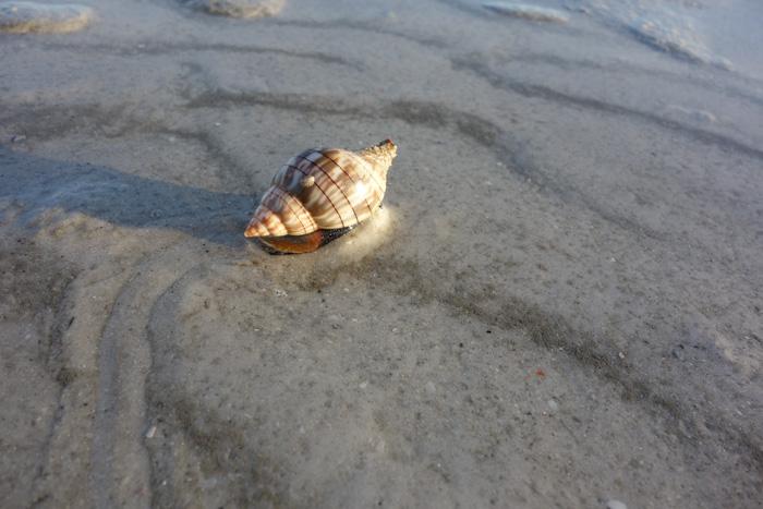 low tide shells-8.jpg