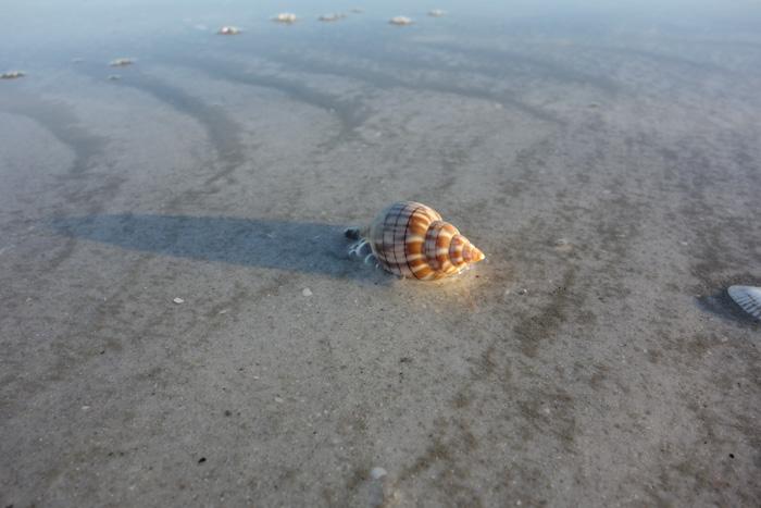 low tide shells-9.jpg