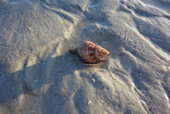 low tide shells-6.jpg