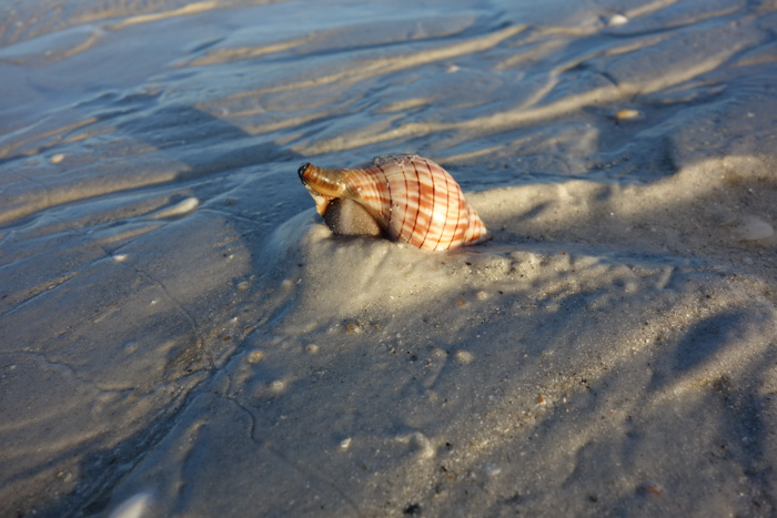 low tide shells-7.jpg