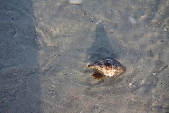 low tide shells-4.jpg