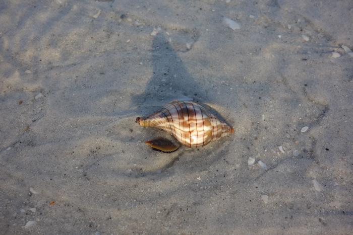 low tide shells-5.jpg